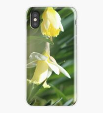 Blooming Daffodils iPhone Case/Skin