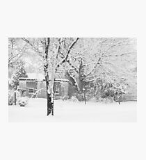 Backyard Snowscape Photographic Print
