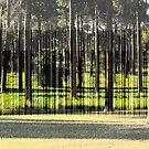 A Stand of Pines by Zern Liew