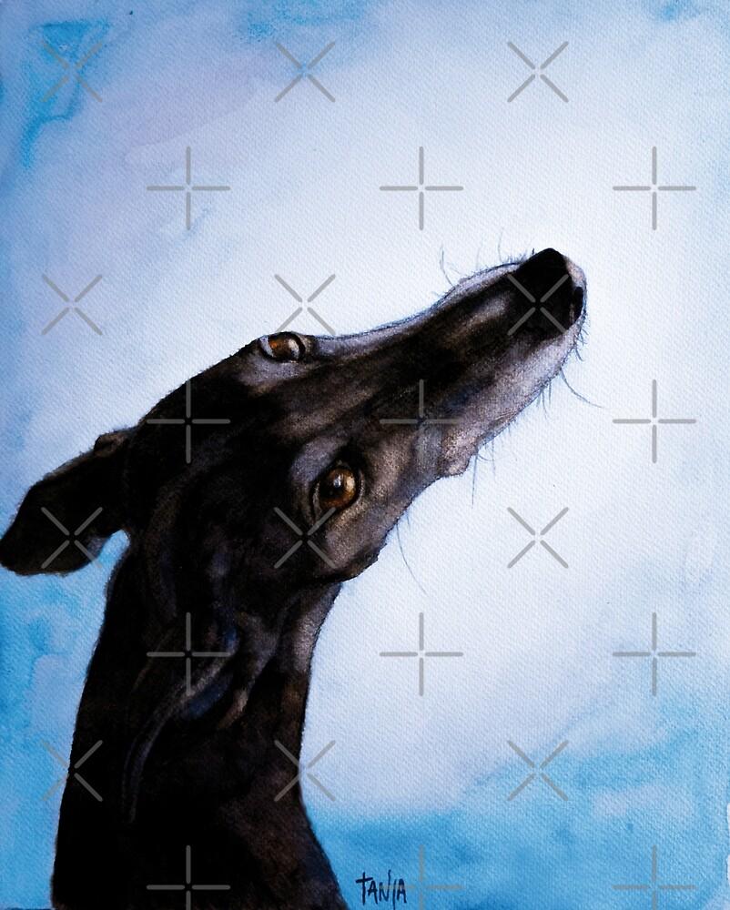 Greyhound - Galgo Español - Always there by Tanja Kooymans