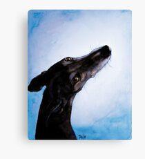 Greyhound - Galgo Español - Always there Canvas Print