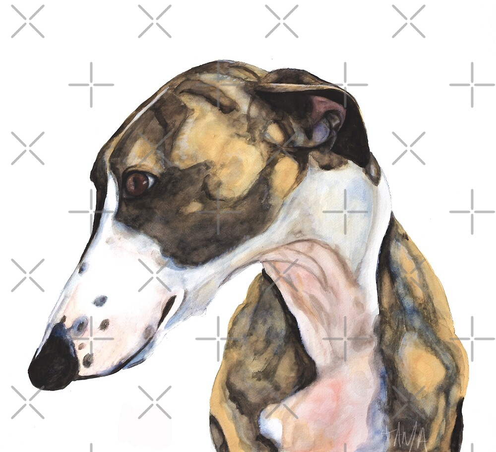 Greyhound - Galgo Español - Enzo  by Tanja Kooymans