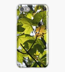 Young Sycamore Leaves iPhone Case/Skin