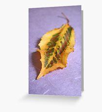 Dappled beauty Greeting Card