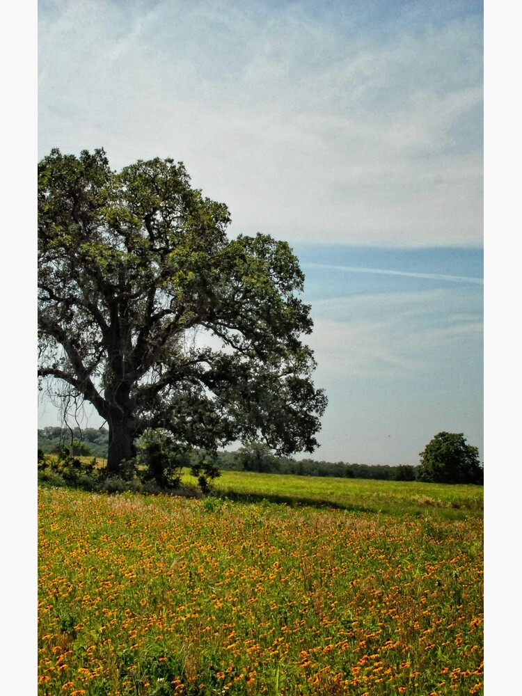 Tree in Field of Gold by colgdrew