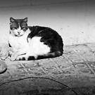Nap Cat by Tommy Seibold