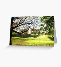 Sunlit trees Greeting Card