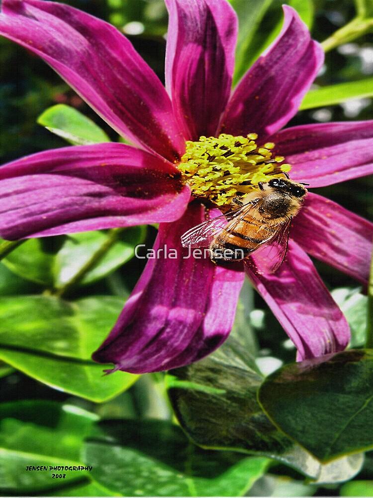 Honey Bee Sweet by Carla Jensen