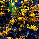 Blue and Yellow Florals by Clayton Bruster