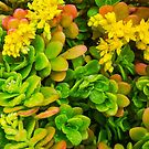 succulent 1 by Bruce  Dickson