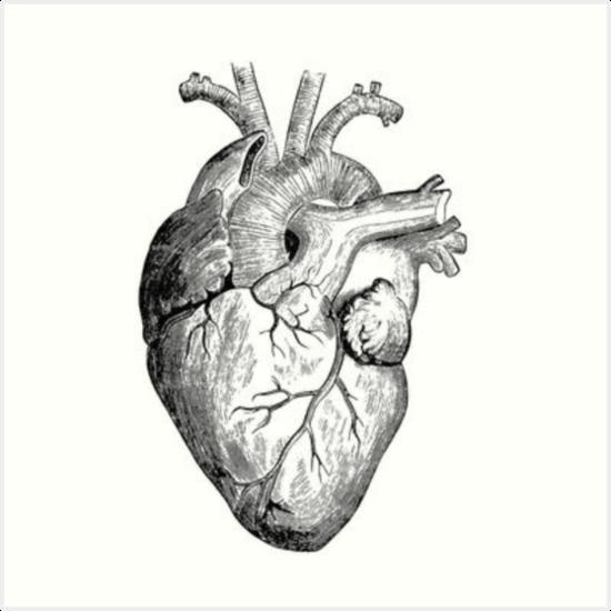 Láminas Artísticas «Dibujo De Corazón Realista» De