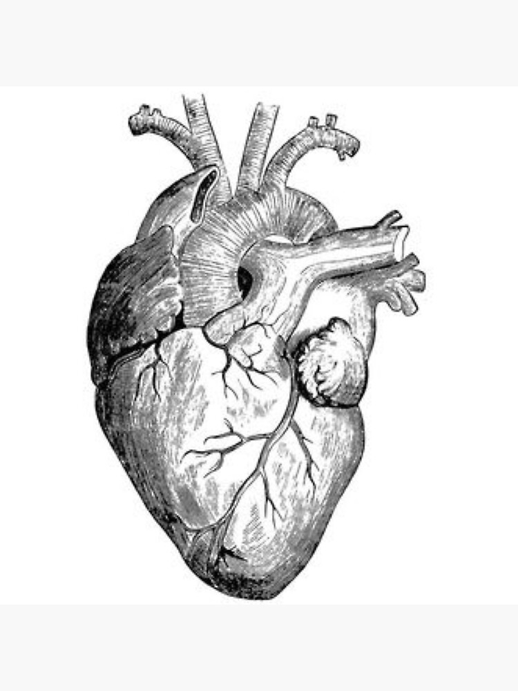 Realistic heart drawing | Photographic Print