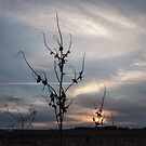 Plant Silhouette At Sunset by Deb Fedeler