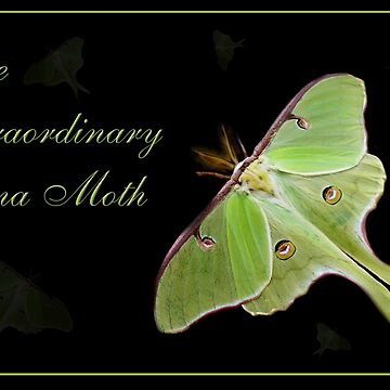 Luna Moth by ArtisticByNature