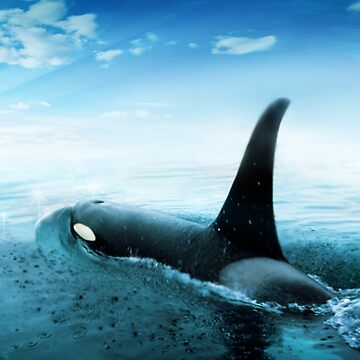 Orca by Cliff