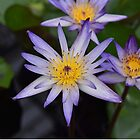 Water Lily Flower - Kew Gardens, London by Chris Monks