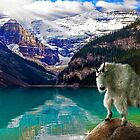 Mountain Goat,lake Louise by Cliff Vestergaard
