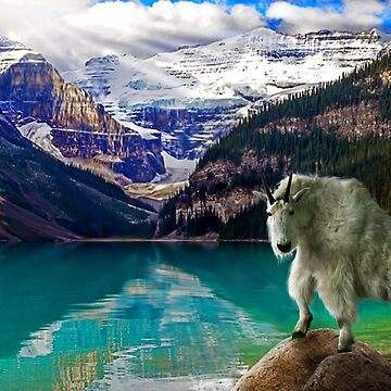 Mountain Goat,lake Louise by Cliff
