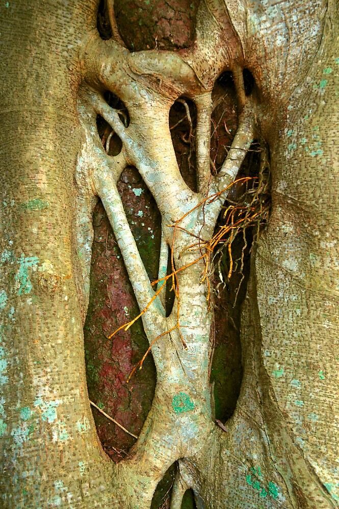 Tree of Wisdom by Lynette Higgs