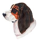 Basset hound - color by doggyshop