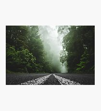 Misty Otway Forest Photographic Print