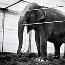 Circus Elephant by Arnaud Lebret