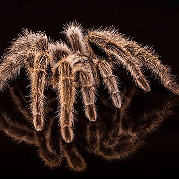 Tarantula by FXST