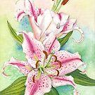 Oriental Lily (watercolour on paper) by Lynne Henderson