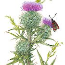 Scottish Spear Thistle (watercolour on paper) by Lynne Henderson
