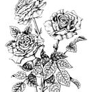 Pen and Ink Roses (pen and ink on paper) by Lynne Henderson