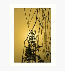 Willow Tree Branches Art Print