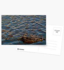 Gator  Postcards