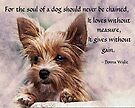 The Soul of a Dog - Yorkie by Chiwow-Media