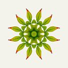 Leaves Mandala by raquelcatalan