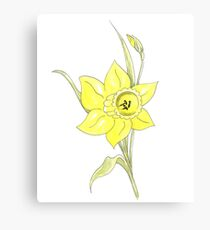 Single Spring Yellow Daffodil on white background Canvas Print