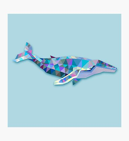 Whale Animals Gift Photographic Print