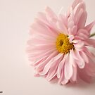 Sweetness and Light by Christianne Gerstner