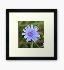 Bee Brilliant Framed Print