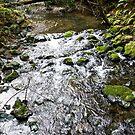 Babbling Brook by Jonathan Bartlett