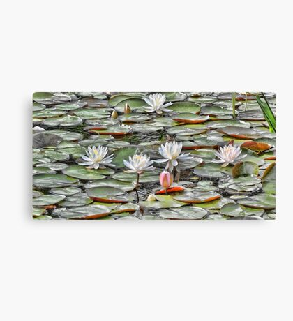 Pond Lilies Canvas Print