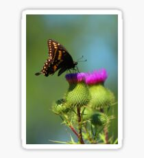 Swallowtail on Canadian Thistle Close-Up Sticker