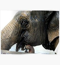 An Elephant Smile Poster