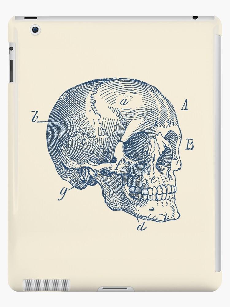 Vinilos y fundas para iPad «Diagrama del cráneo - anatomía vintage ...