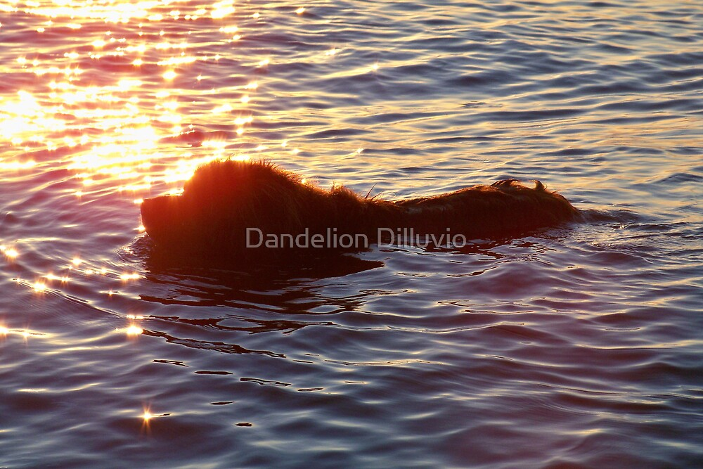 Swimming Through the Sunset by Dandelion Dilluvio