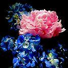 Peony Hydrangea Drama 5312 by Candy Paull