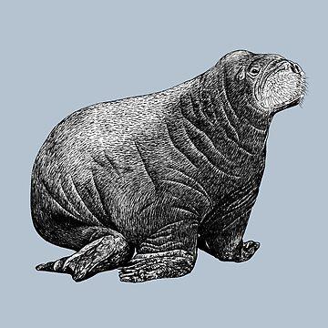 Walrus Calf by AirDrawn