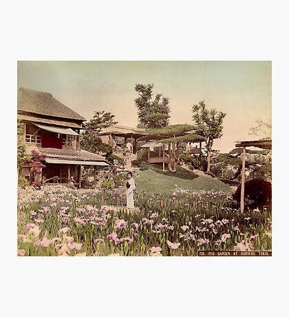 Iris garden at Horikiri, Japan Photographic Print