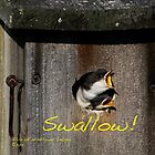 Swallow! by Alice Kahn