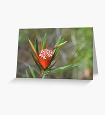 Mountain Devil Greeting Card