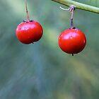 Bright Ripe Red Berries by sienebrowne